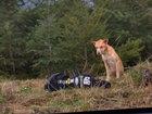Девушки показали чудеса креатива, спасая бездомного пса - ФОТО: Фоторепортажи