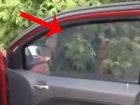 Вот чего на самом деле не хватало всем автовладельцам - ВИДЕО: Видеоновости