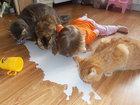15 детей, которые все повторяют за животными - ФОТО : Фоторепортажи