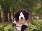 Эта собака заставит вас улыбнуться - ВИДЕО: Видеоновости