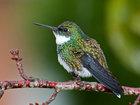 Самые красивые виды колибри - ФОТОСЕССИЯ: Фоторепортажи