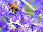 Маленькие любители цветочного нектара - ФОТОСЕССИЯ: Фоторепортажи