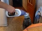 Забавный кот играет с хозяином - ВИДЕО: Видеоновости