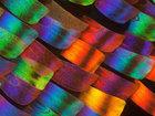 Удивительные макрофотографии крыльев бабочек - ФОТОСЕССИЯ: Фоторепортажи