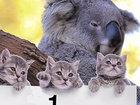 10 самых милых зверушек 2014 года - ВИДЕО   : Видеоновости