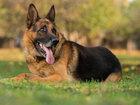 Игрушка для гиперактивных собак - ВИДЕО: Видеоновости