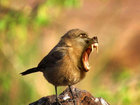 Страшные животные-гибриды - ФОТО: Фоторепортажи