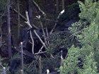 Разбился военный вертолет, есть пострадавшие - ФОТО: Фоторепортажи