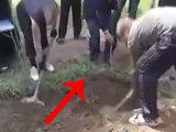 Мужчина вылез из могилы на глазах у всех - ВИДЕО: Это интересно