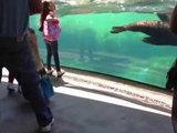 Морской лев испугался за девочку - ВИДЕО: Это интересно