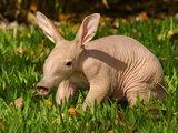 20 животных, которых вы вряд ли видели новорожденными - ФОТО: Это интересно