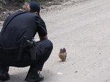 Совенок встал на пути у полицейского автомобиля - ВИДЕО: Это интересно