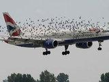 Пилоты и пассажиры на волоске от смерти - ВИДЕО: Это интересно