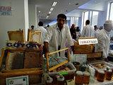Сладкая сенсация: в Баку открылась ярмарка меда – РЕПОРТАЖ - ФОТО: Общество