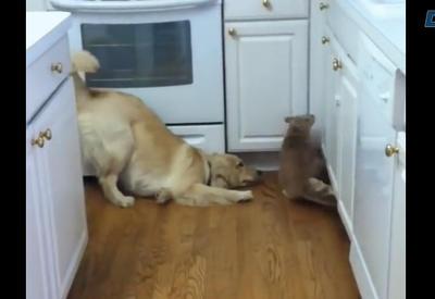 """Собака пытается втянуть кота в игру <span class=""""color_red"""">- ВИДЕО</span>"""