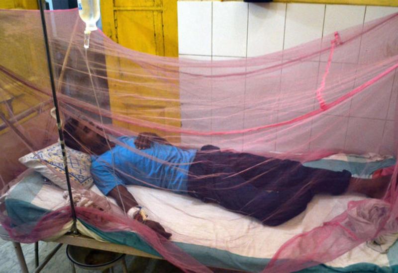 Комары заразили ужасной болезнью 20 000 человек