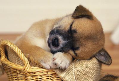 17 причин завести собаку