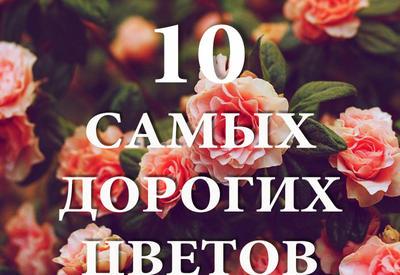 """10 самых дорогих цветов в мире <span class=""""color_red"""">- ФОТО</span>"""