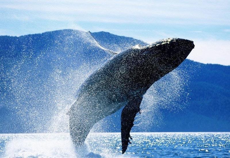 У берегов Японии пассажирский паром столкнулся с китом