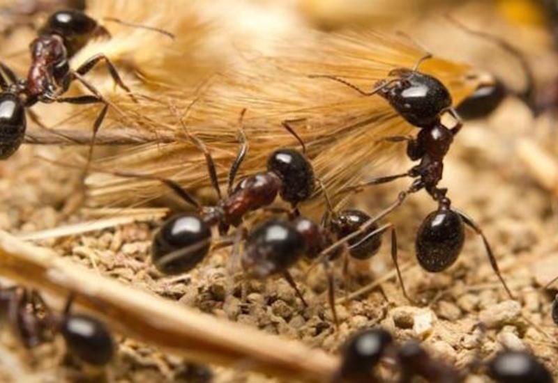 Заблудившегося в пустыне мужчину спасли муравьи