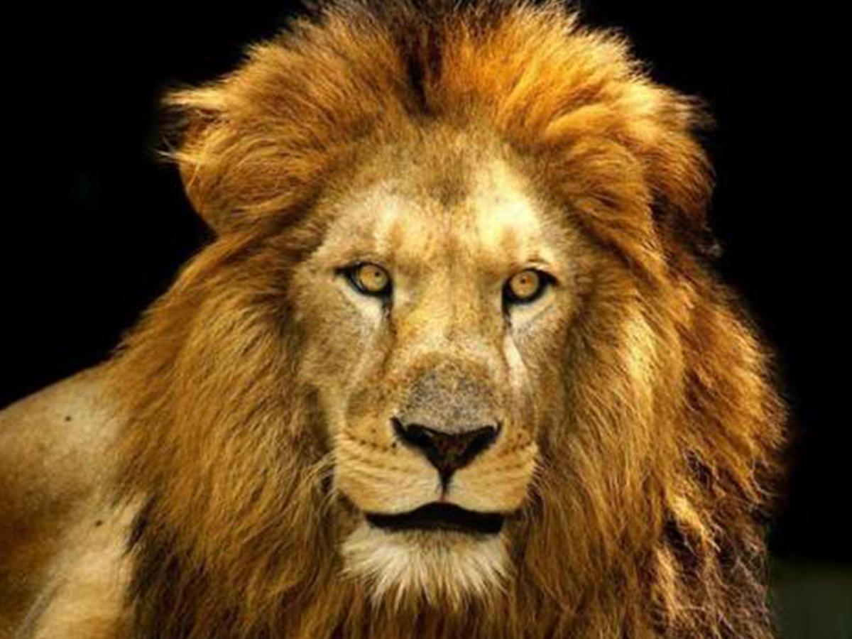 кто по гороскопу животных самый сильный