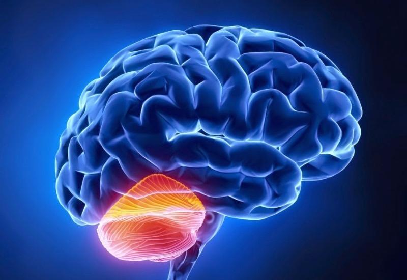 Baş-beyində digər insanları qiymətləndirən sistem varmış