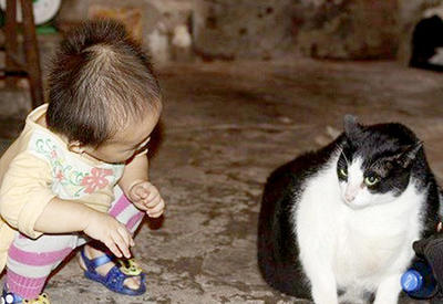 """Во Вьетнаме нашли самого толстого кота в мире <span class=""""color_red"""">- ФОТО</span>"""