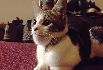 """Коты, которых ужалила оса - они к такому не были готовы <span class=""""color_red"""">- ФОТО</span>"""