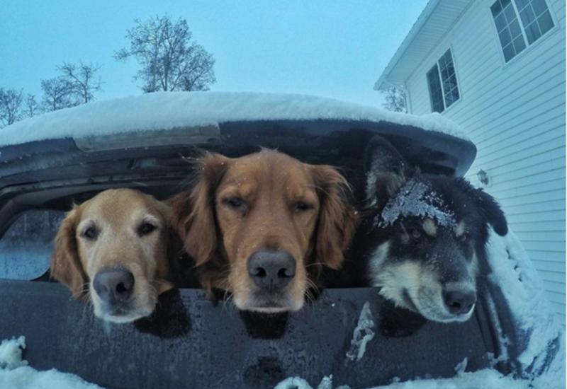 """Стоматолог покорил Интернет смешными снимками собак <span class=""""color_red"""">- ФОТО</span>"""