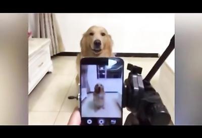 """Этот пес поистине уникален <span class=""""color_red"""">- ВИДЕО</span>"""
