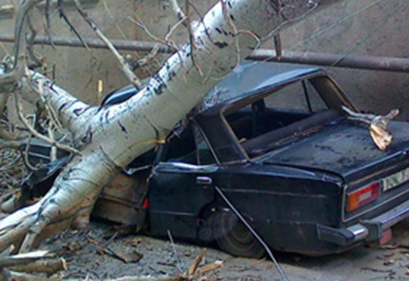 Bakıda külək ağacı avtomobilin üstünə aşırdı