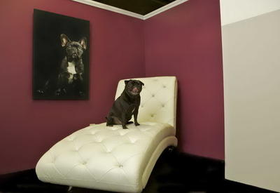 """До 200 долларов за ночь: отель для собак в Нью-Йорке <span class=""""color_red"""">- ФОТО</span>"""