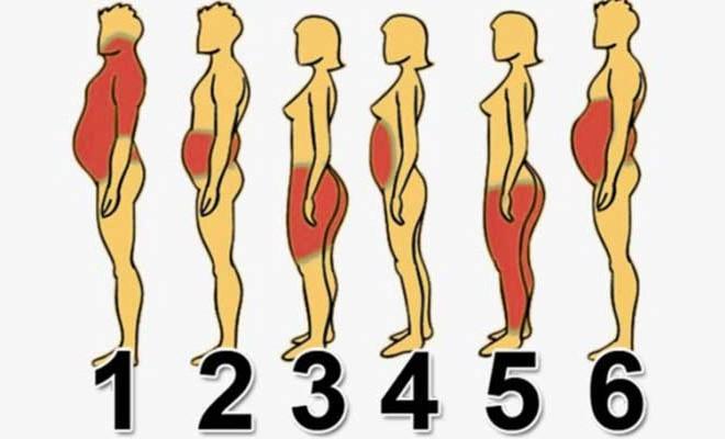 накапливается жир на животе