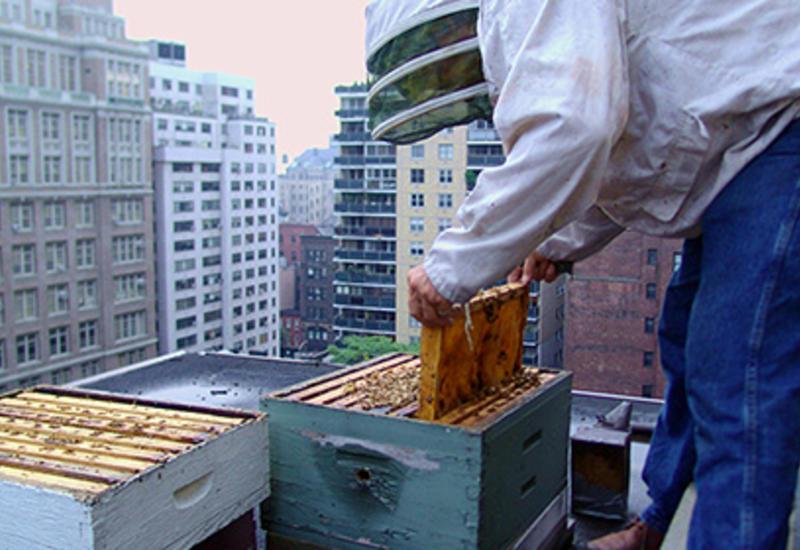 В гибели пчел в США обвинили Европу