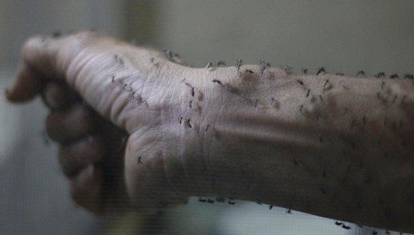 ВУкраине масса насекомых, способных переносить вирус Зика