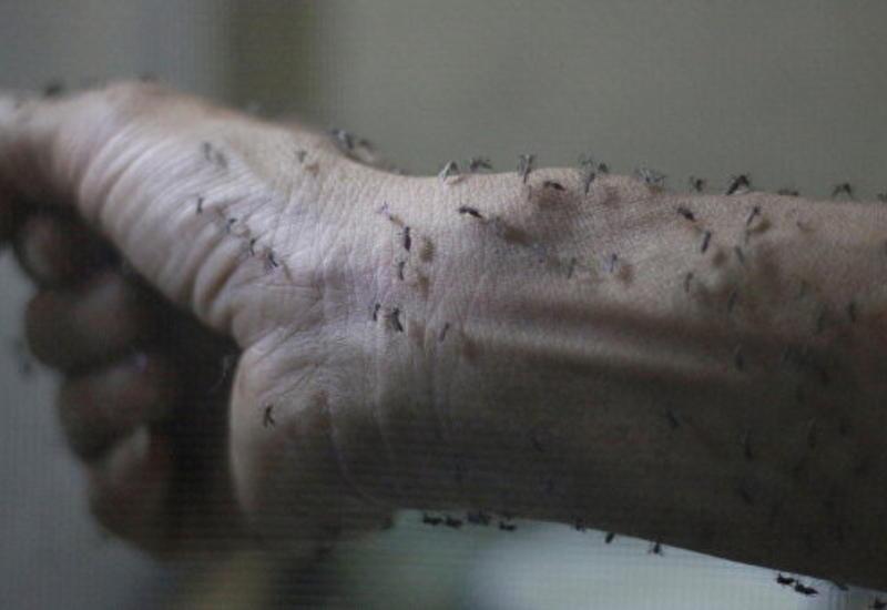 Первый случай заражения вирусом Зика зафиксирован в Китае