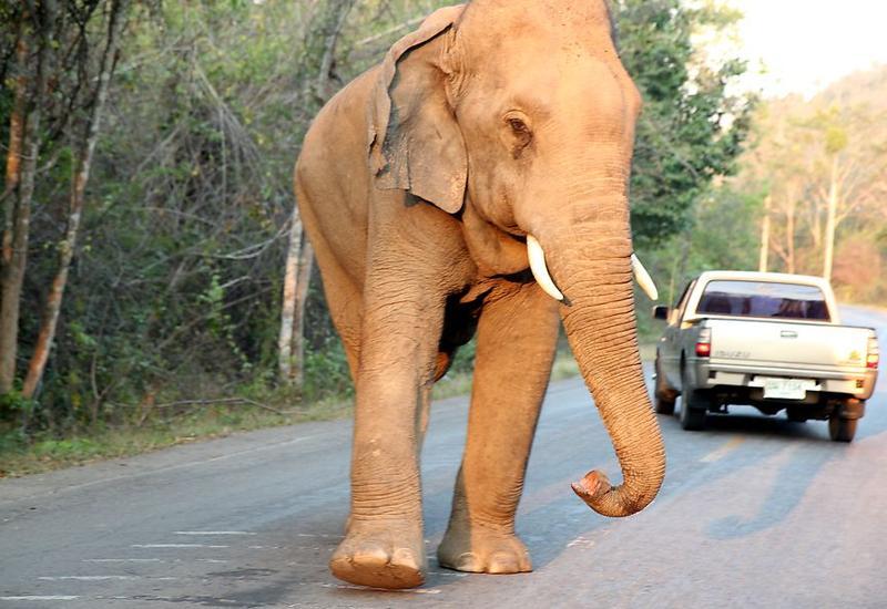 """В Индии дикий слон разгромил десятки домов <span class=""""color_red"""">- ВИДЕО</span>"""