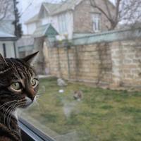Azərbaycandakı pişik otelindən REPORTAJ - FOTO