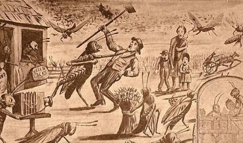 Год саранчиСухая весна 1874 года была очень благоприятна для саранчи, отложившей триллионы яиц в прериях у Скалистых гор. Летом все это полчище вылупилось и уничтожило все, что росло в Небраске, Канзасе, Дакоте и Айове.
