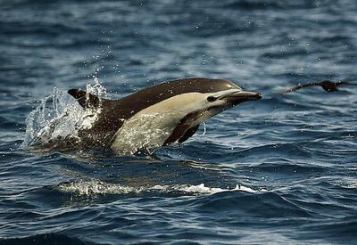 В Грузии почти два десятка дельфинов найдены мертвыми на побережье
