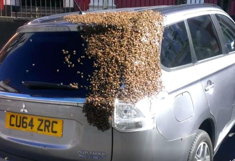 """В Уэльсе тысячи пчел атаковали автомобиль <span class=""""color_red"""">- ВИДЕО</span>"""