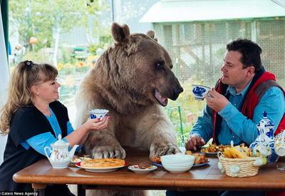 """Британская Daily Mail рассказала о воспитывающей медведя русской семье <span class=""""color_red"""">- ФОТО - ВИДЕО</span>"""