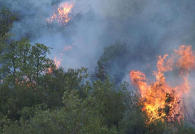 Пожар в Гаджигабуле уничтожил 180 эльдарских сосен