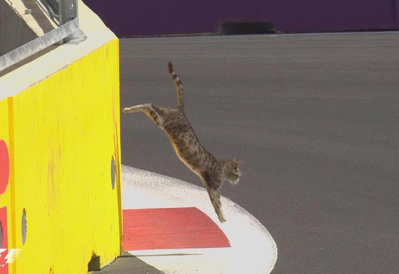 """Неожиданный гость на трассе Формулы-1 в Баку <span class=""""color_red""""> - ФОТО</span>"""
