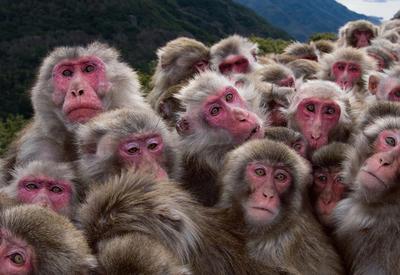 В Танзании судят армян, пытавшихся вывезти 61 обезьяну