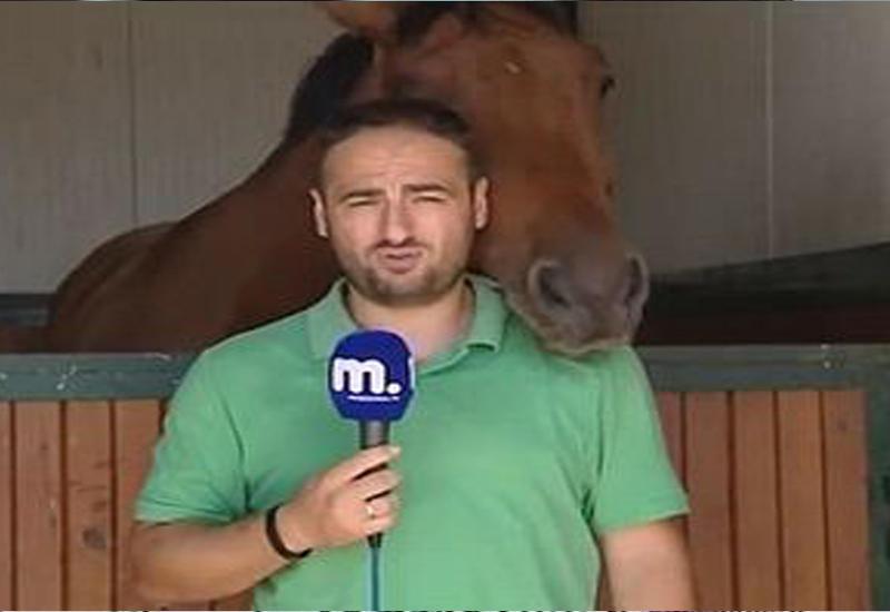 "Лошадь сорвала журналисту репортаж <span class=""color_red"">- ВИДЕО</span>"