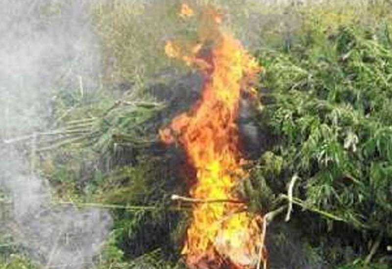 В Баку уничтожили наркотики на 13 млн. манатов