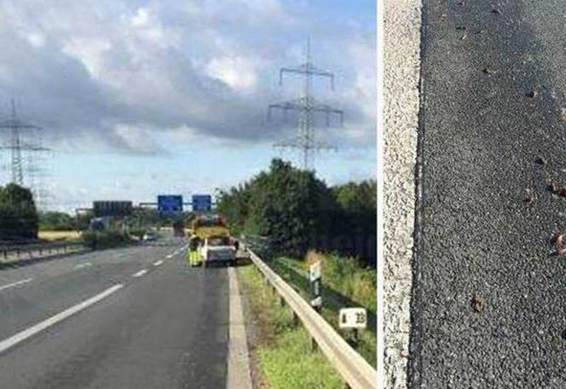 В Германии улитки перевернули автомобиль