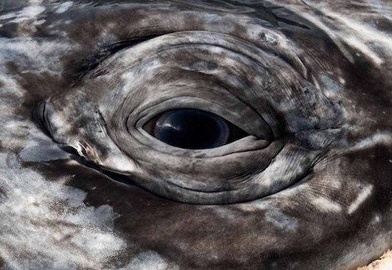 """Восхитительные снимки фотографа, наблюдавшего за морскими животными более 25 лет <span class=""""color_red"""">- ФОТО</span>"""
