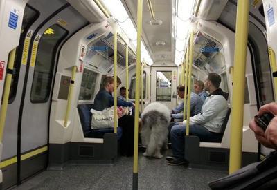 Паника в лондонском метро: эвакуируют пассажиров